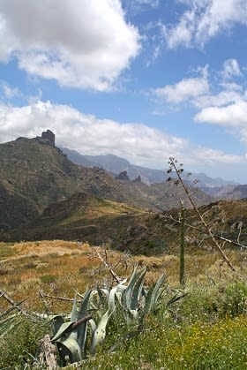 Canary Islands countryside