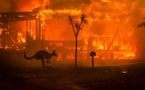 Image result for Australia bush fires