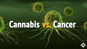 cannabisvscancer