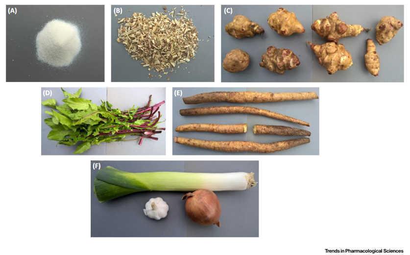 Φυτά και Ενδοκανναβινοειδές Σύστημα 6