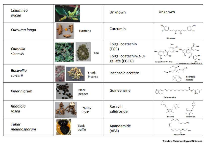 Φυτά και Ενδοκανναβινοειδές Σύστημα 7