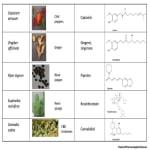 Φυτά και Ενδοκανναβινοειδές Σύστημα 1