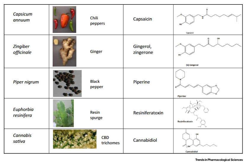 Φυτά και Ενδοκανναβινοειδές Σύστημα