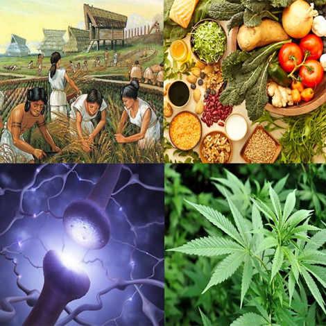 Ενδοκανναβινοειδές Σύστημα και Δίαιτα (χωρίς κάνναβη) 1
