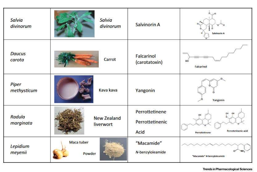 Φυτά και Ενδοκανναβινοειδές Σύστημα 2