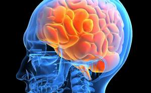 how-does-cbd-work-with-the-brain-300x185