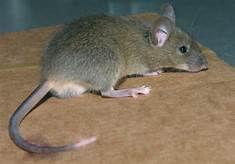 Entreprise traitement souris dans le 91, 94 et 77