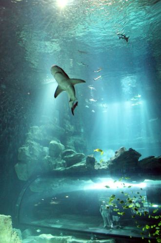 Aquarium Paris Billet jour