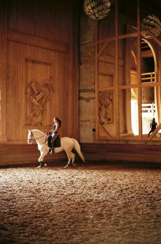 Coulisses Académie Equestre