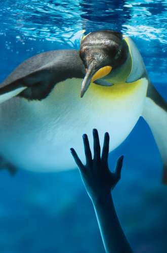 King Penguin Aquarium Sea Life