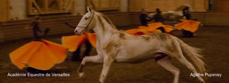 Académie Equestre de Versailles Agathe Pupeney