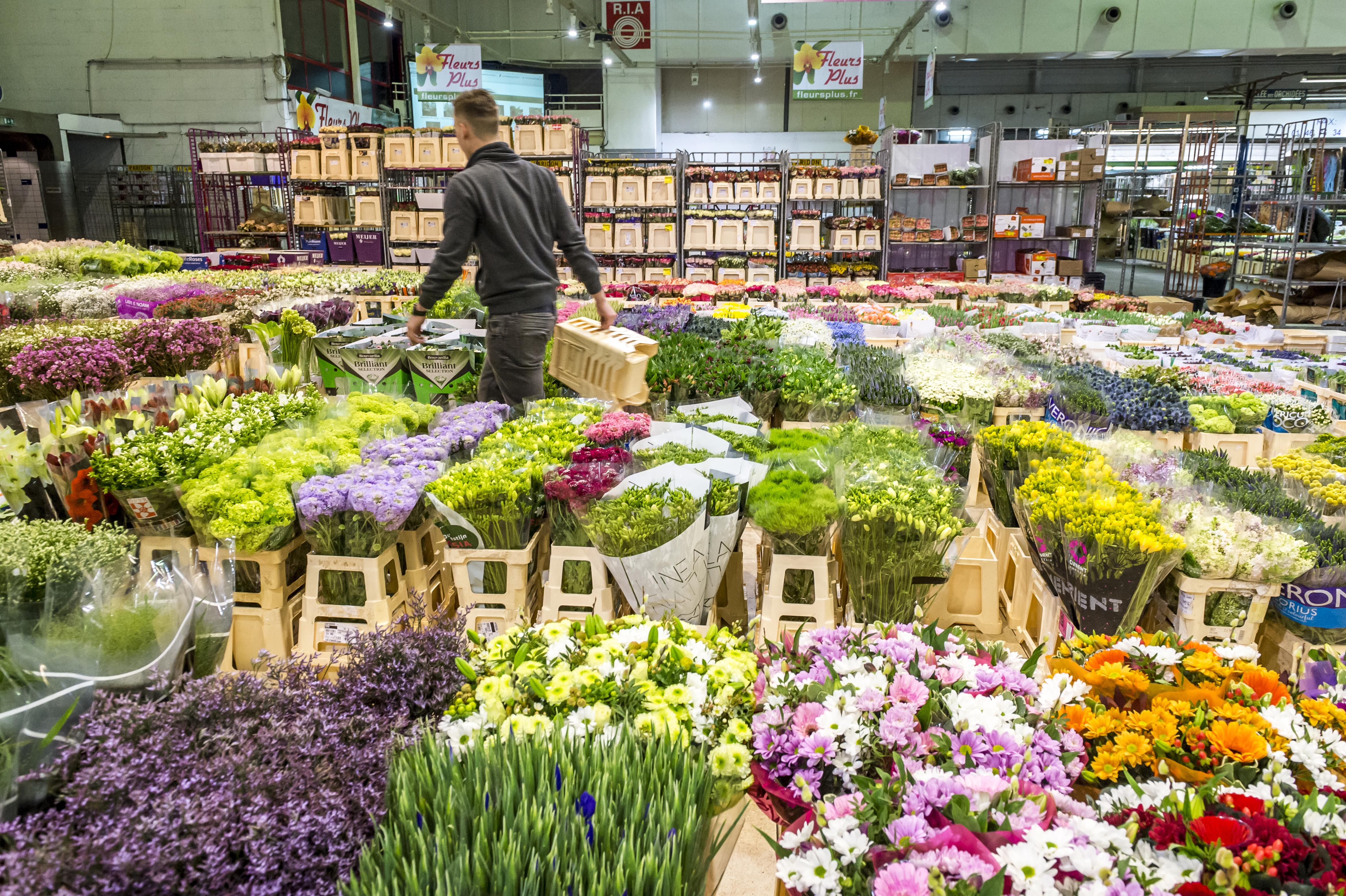 Rungis%252C marché international%252C secteur fleurs%252C pavillon C1%252C fleurs coupees Semmaris