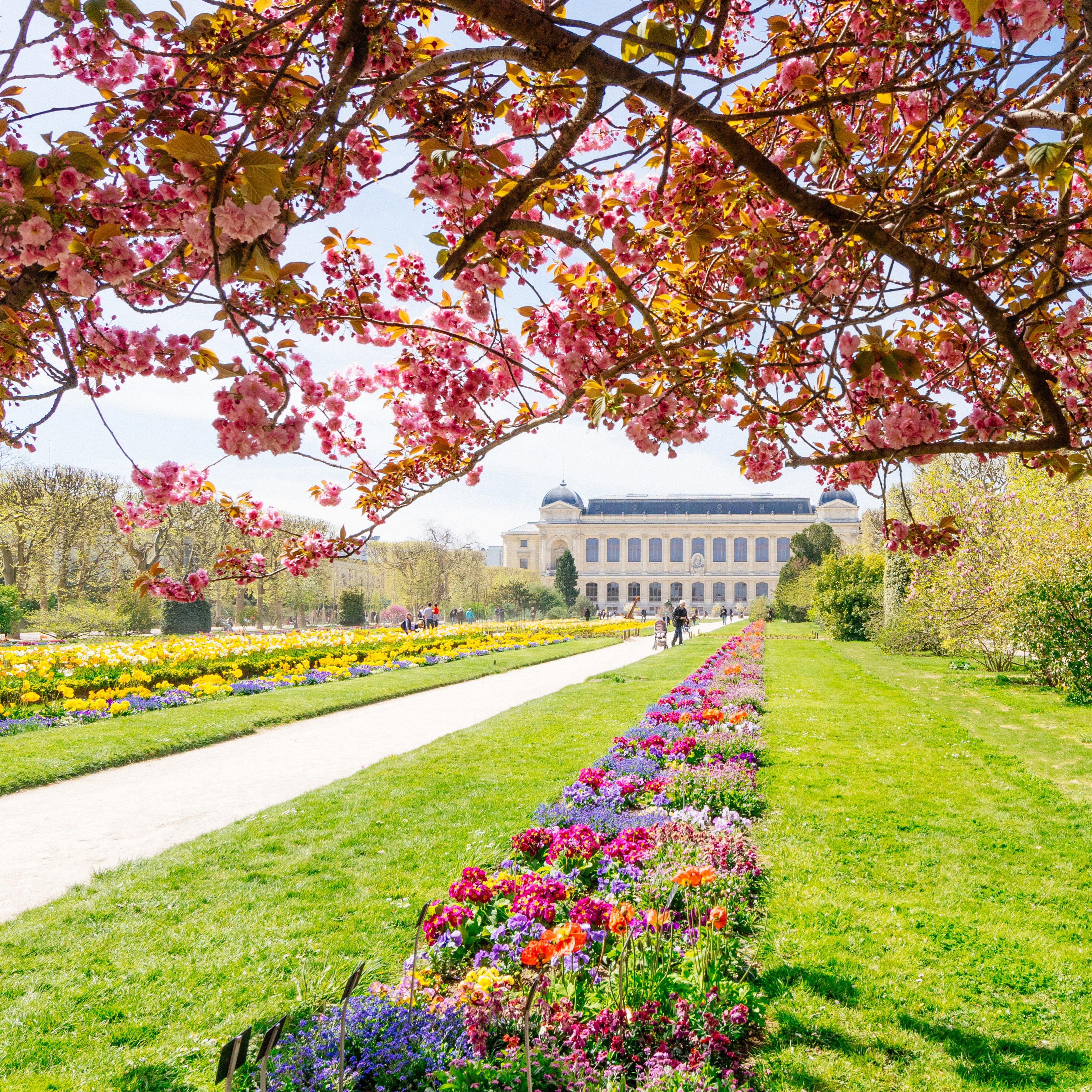 Jardin des Plantes au printemps%252C parterre de fleurs%252C Paris 2016. CRT IDF%252FLiiinks%252FQuincy