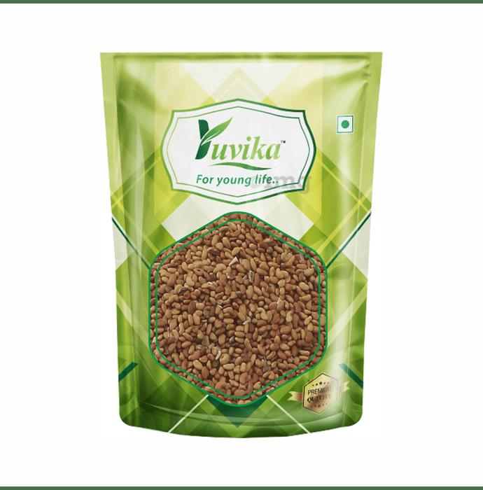Yuvika Alfalfa Seeds