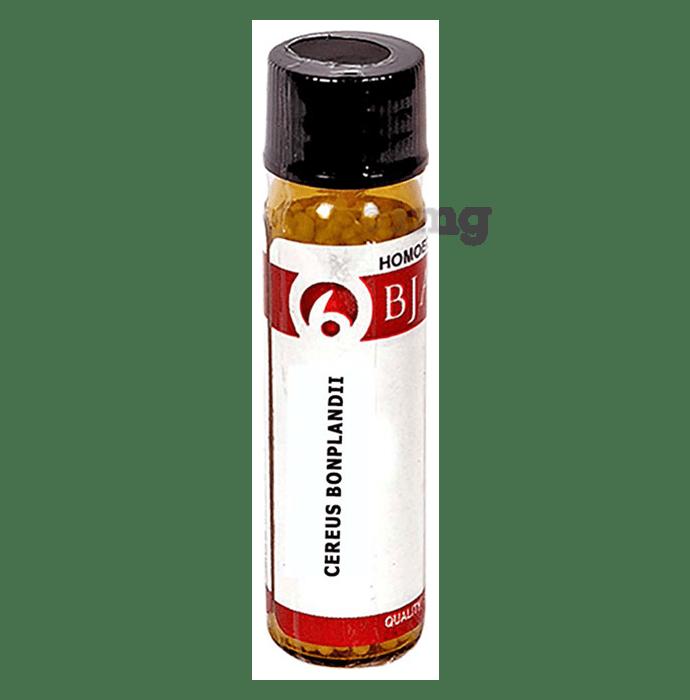 Bjain Cereus Bonplandii Globules 30 CH
