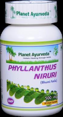PLANET AYURVEDA PHYLLANTHUS NIRURI