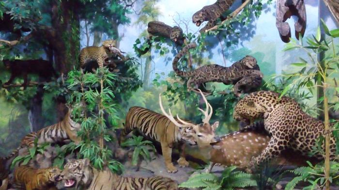 Rahmat International Wildlife Museum dan Gallery