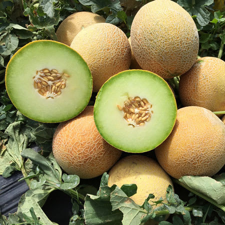 galia melon each