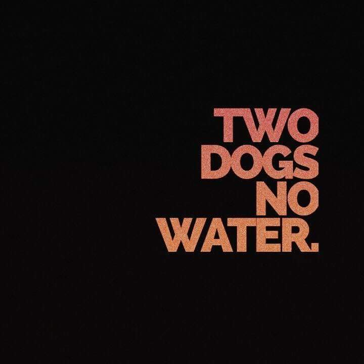 two dogs no water