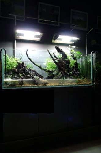 Basic Aquarium thumbnail