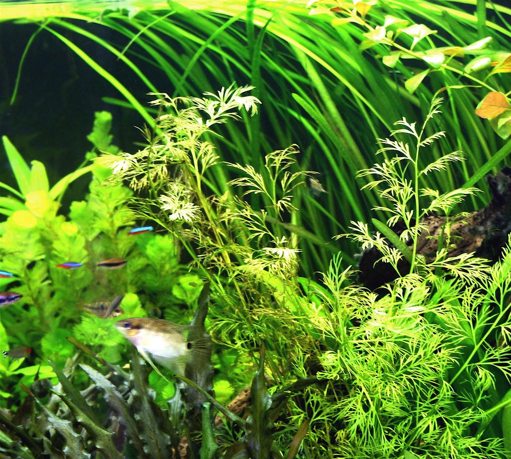 Complete Planted Aquarium thumbnail