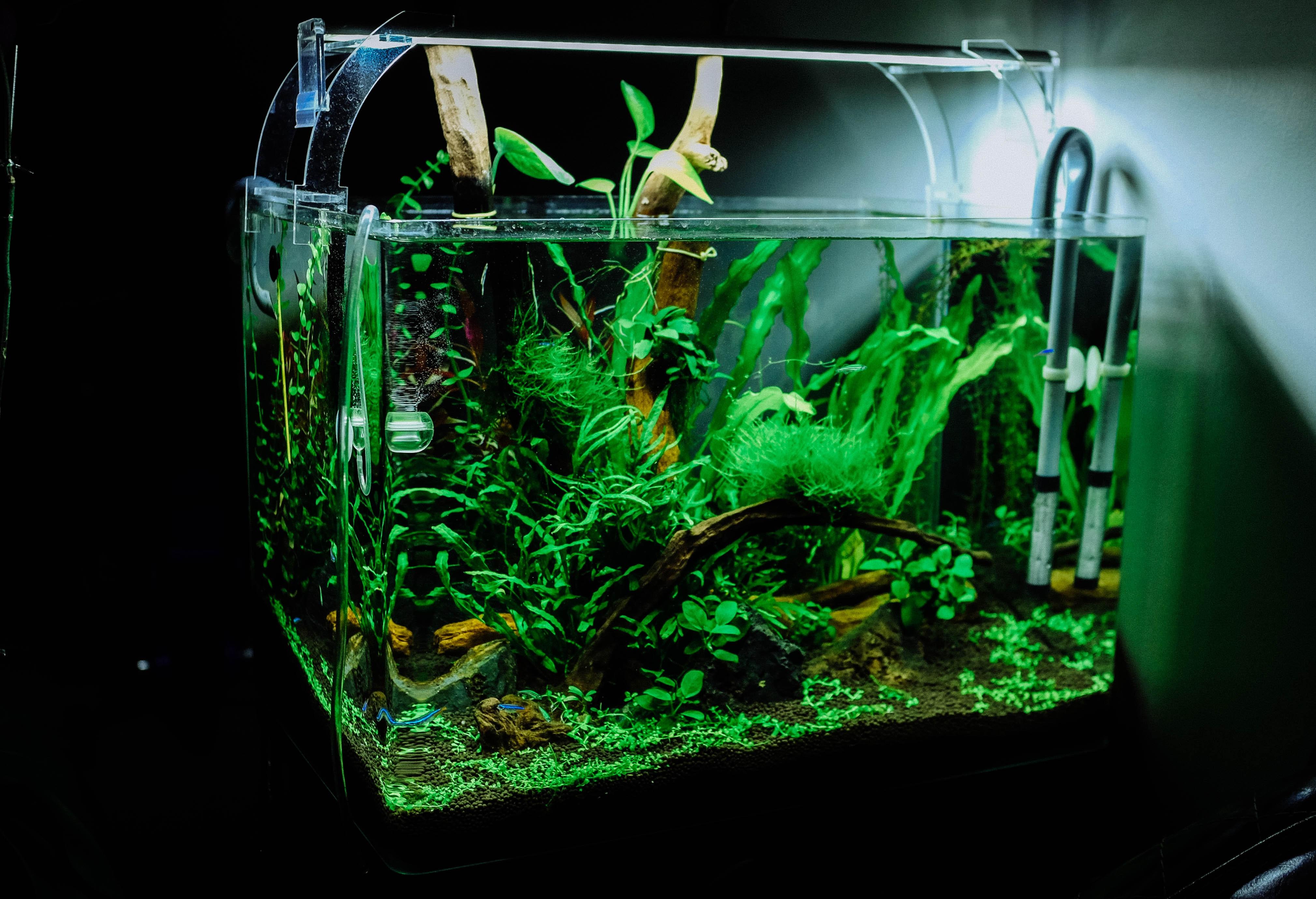 18 Gallon Community Aquarium thumbnail