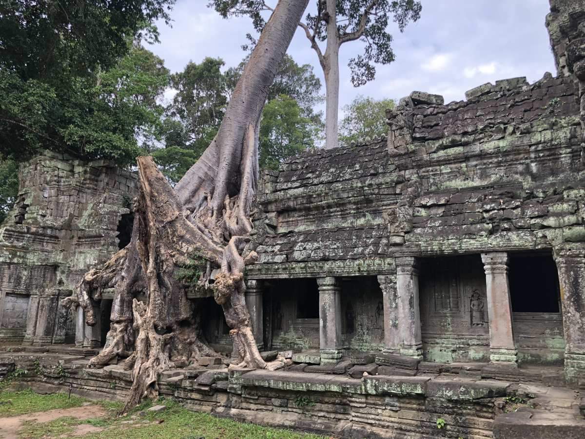 A tree entwines around Preah Khan