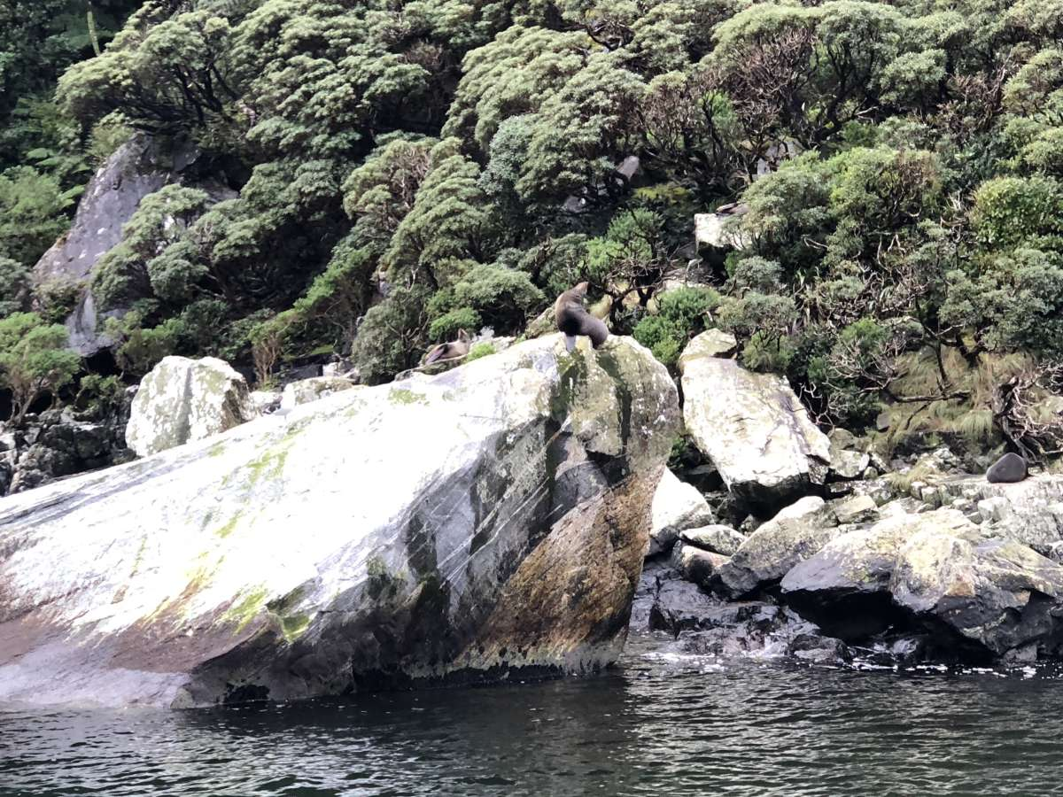 Spot the seals!