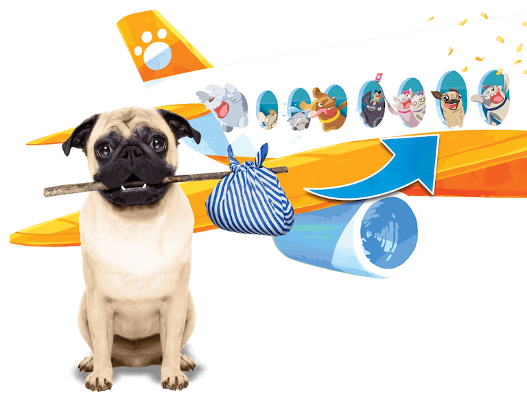 A picture of a pug dog flying to Petlandia on a plane.