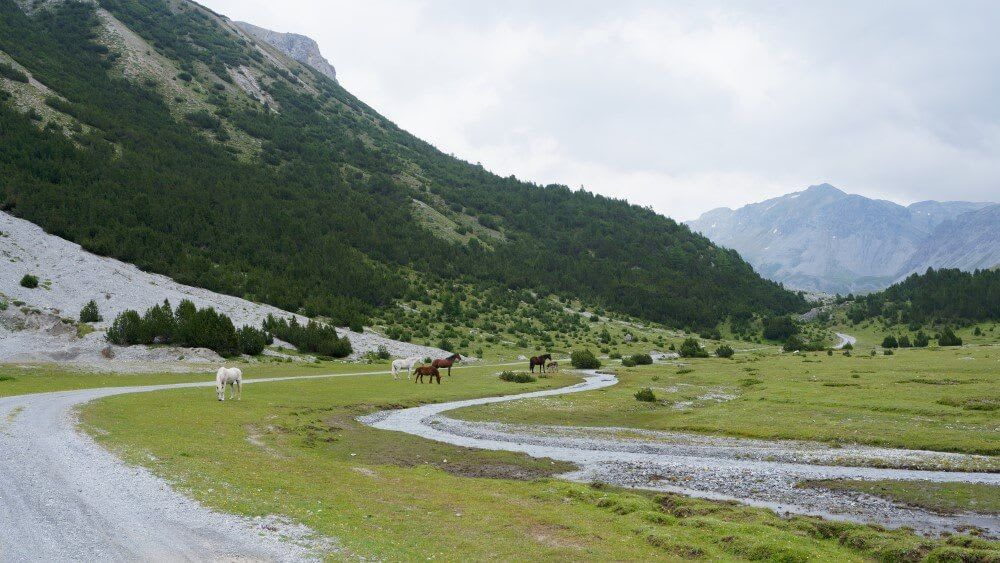 Horses grazing between mountains