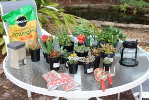 Here are my supplies: succulents, special Cactus, Palm & Citrus potting mix, gloves, and gardening tools.
