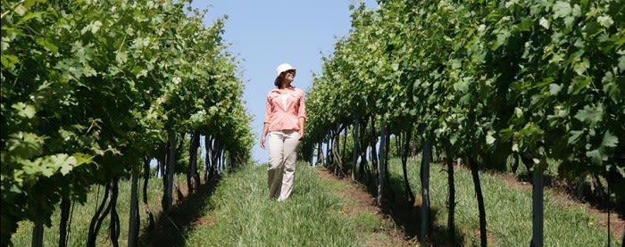 The area surrounding Dalton includes several notable vineyards and wineries