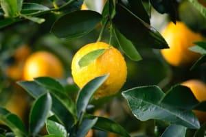 agriculture-citrus-close-up-129574