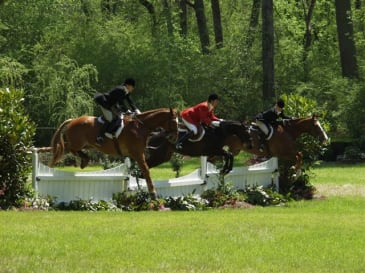 Aiken is a major equestrian center and thoroughbreds are everywhere.