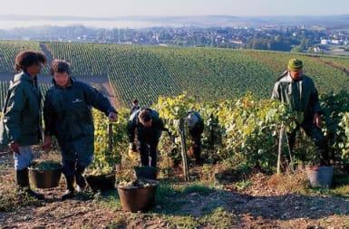 Joseph Drouhin Vineyards