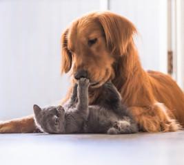 Katzen- und Hundeversicherung: Was ist versichert?