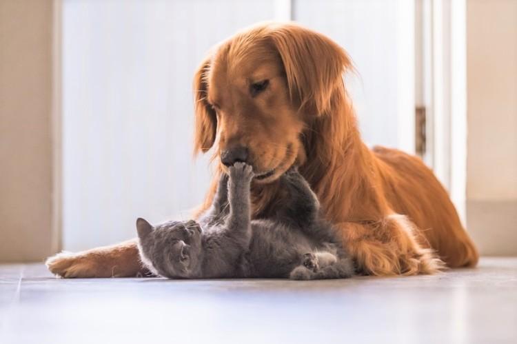 atzen- & Hundeversicherung: Was ist versichert?