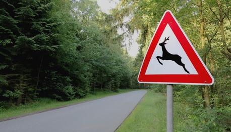Verkehrszeichen - Wildwechsel