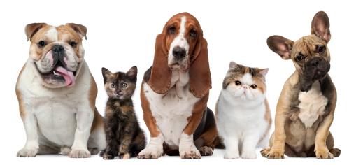 Hunde+Katzen_Globalp