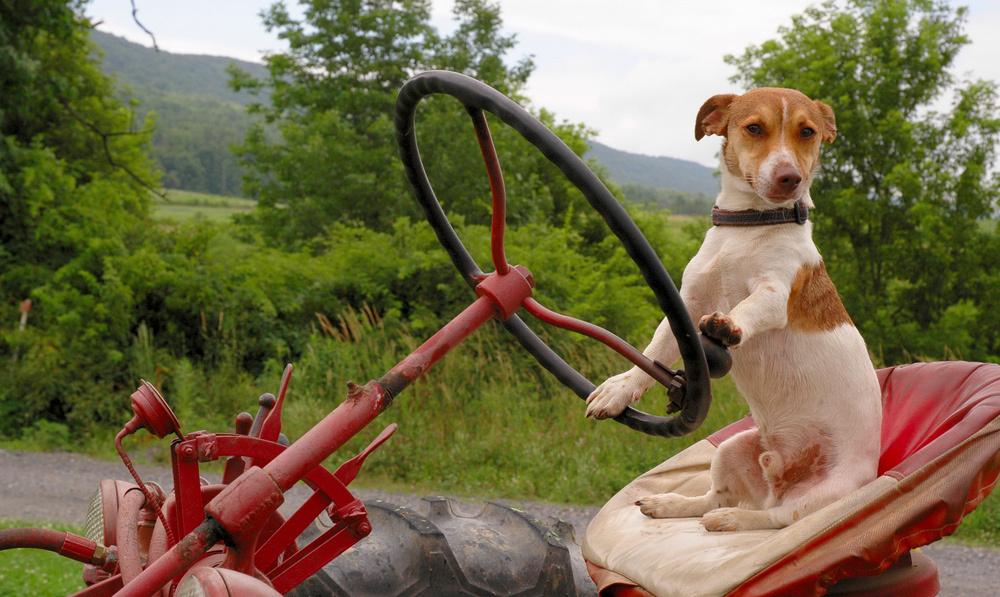 Tierische Versicherungsfälle