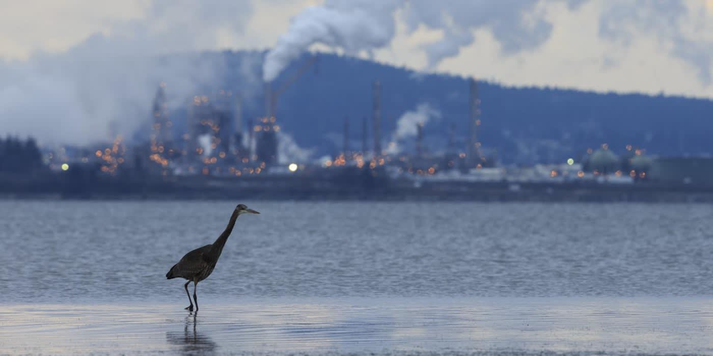 Air Pollution Laws May Have Saved Over 1.5 Billion Birds in American Skies, Finds New Cornell Study