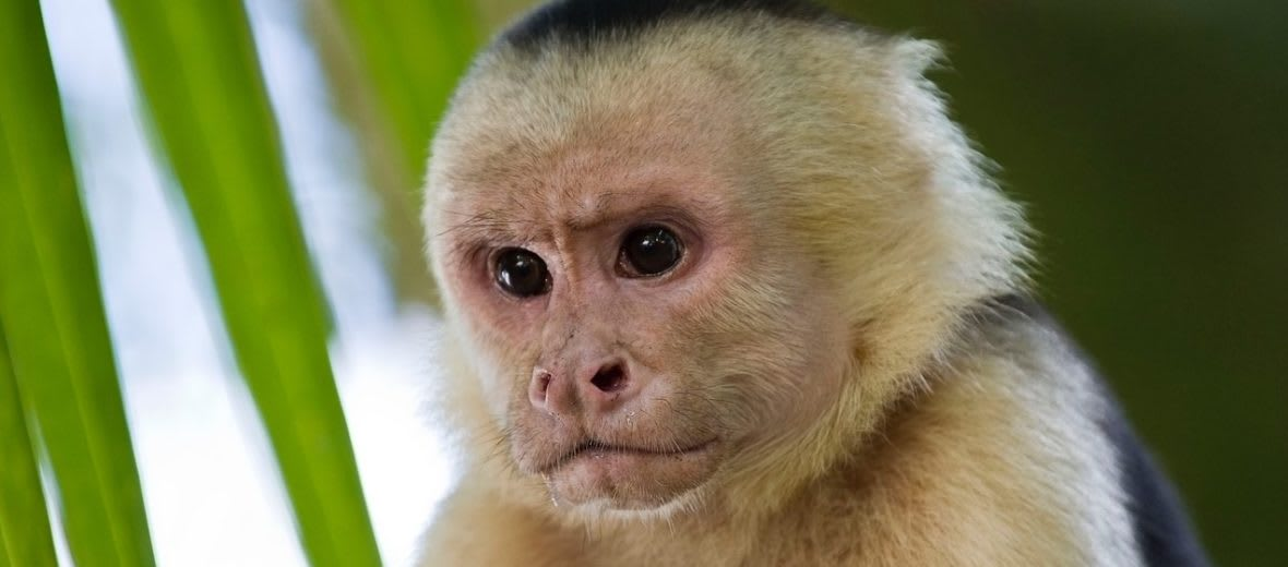 """Florida Man Known as """"The Monkey Whisperer"""" Accused of Illegally Breeding and Selling Protected Primates - Breaking911"""
