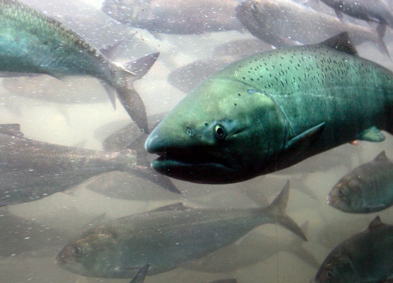 One-third of freshwater fish face extinction, report says