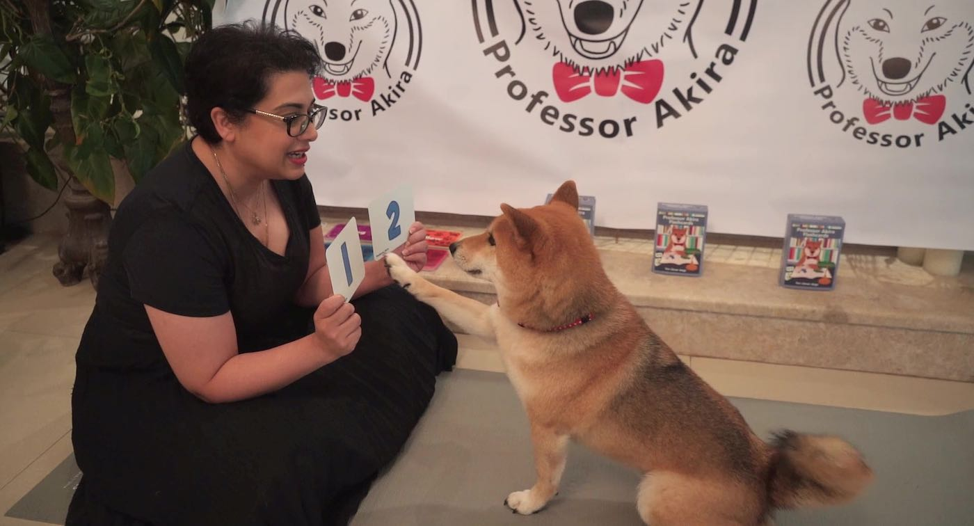 Woman Uses Lockdown to Teach Her Clever Dog Math And Colors With Homemade Flash Cards