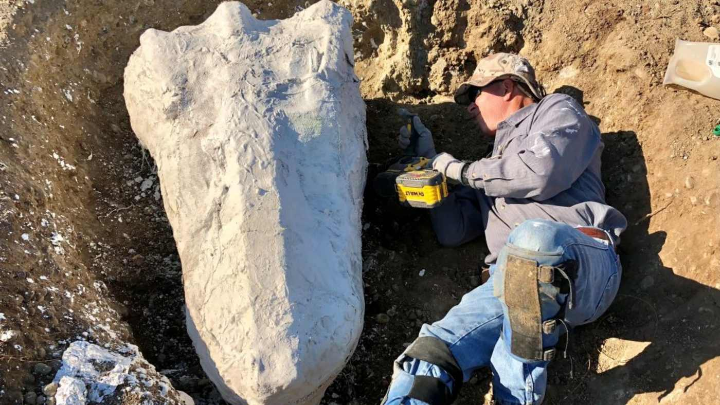 Astounding Fossil Discovery in California After Man Looks Closely at Petrified Tree And Finds Bones of Great Beasts