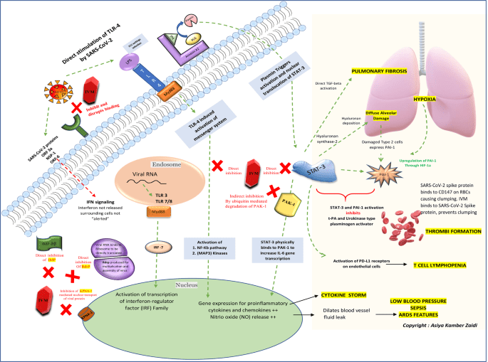 The mechanisms of action of Ivermectin against SARS-CoV-2: An evidence-based clinical review article
