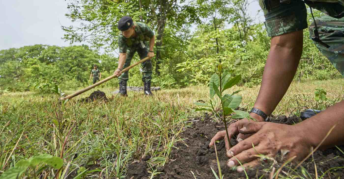 Volunteers in India Do it Again–Planting 250 Million Saplings in Single Day and Seeing 80% Survival Rate