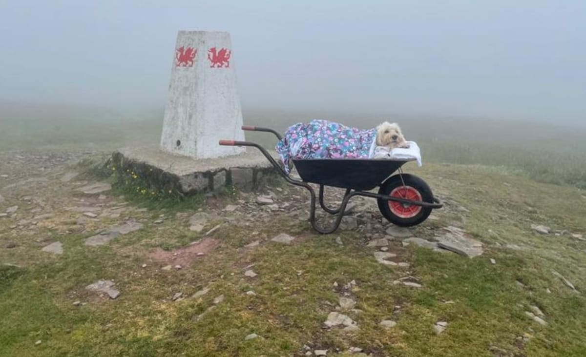 Man Gives His Terminally-Ill Dog One Last Walk Up Their Beloved Mountain in a Wheelbarrow (PHOTOS)