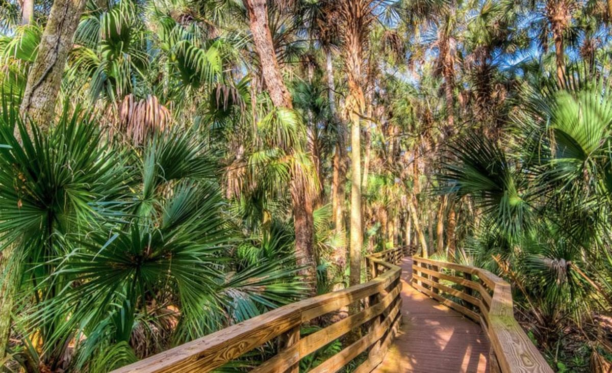 10 Underrated Hiking Trails in Florida For Your Next Outdoor Adventure