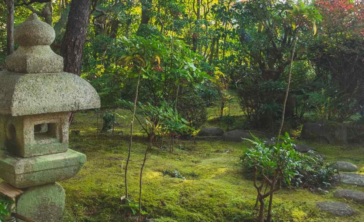 Ditch That Hard-to-Grow Lawn And Start Cultivating Moss, Instead